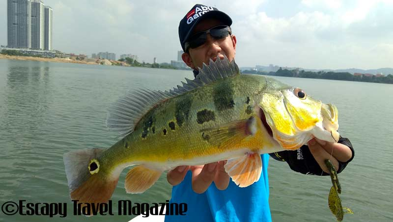 The Angler Magazine, The Angler, The Asian Angler, fishing Prima Lake, Prima Lake, fishing in Prima Lake, Tasik Prima, Fishing tasik Prima, Where to fish in Selangor, where to fish, where to fish in Puchong, fishing in Malaysia