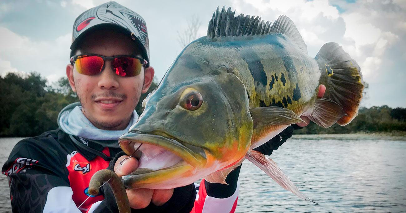 peacock bass fishing malaysia, where to fish in perak, fishing perak, monster peacock bass fishing, malaysia fishing, malaysia bass fishing, monster bass malaysia, monster bass, perak bass fishing, fishing in malaysia, fishing in perak, places to fish in perak, places to fish in malaysia