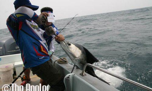The Angler, the angler, the angler magazine, the angler asia, the asean angler, the angler pockezine, pockezine, Penn Clash rod, penn clash rod, clash rod, penn clash fishing rod,