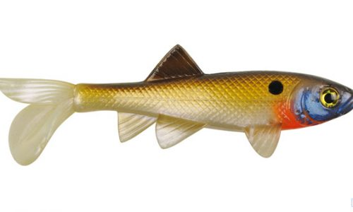 sickfish-small